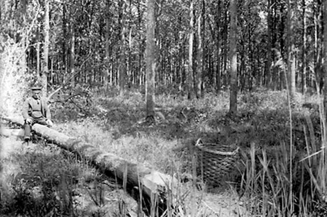 1910 Eikenschors afschillen voor looierij