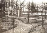 1909 7 Tuin